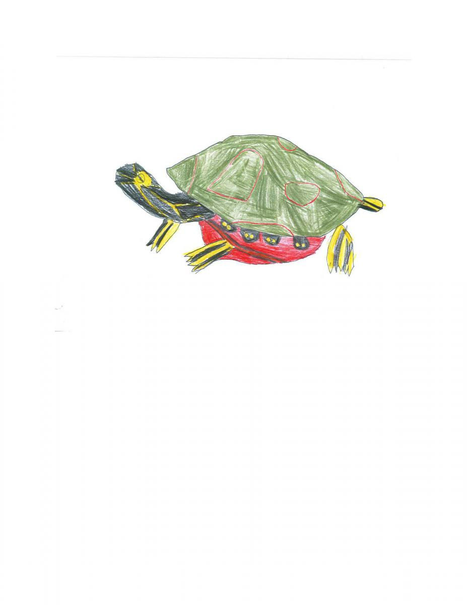August- Casey, Kindergarten, Kelowna (Western Painted Turtle)
