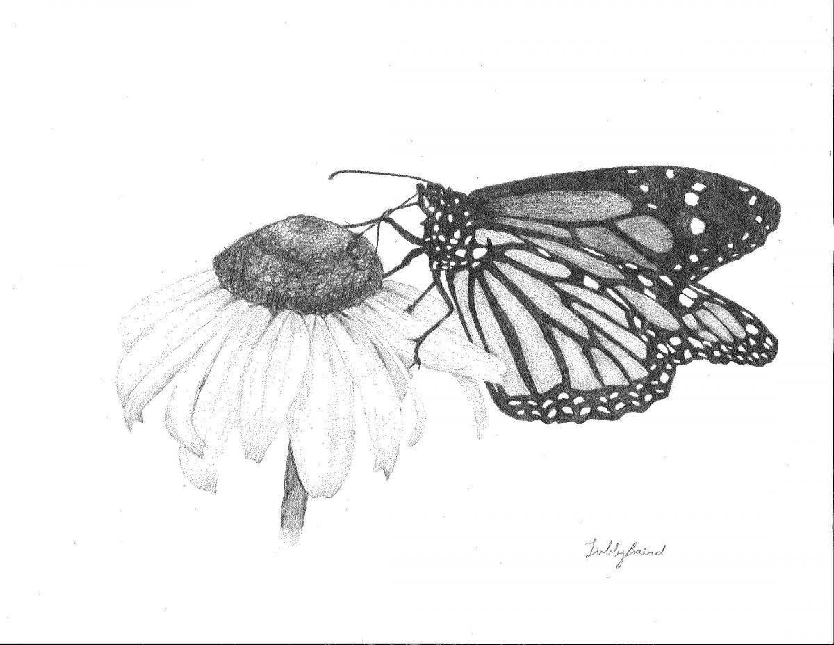 May- Libby, Gr. 10, Abbotsford (Monarch Butterfly)